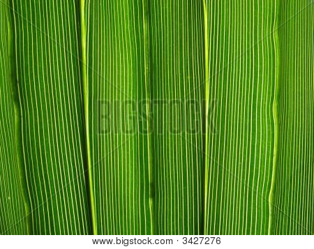 Hoja verde vibrante líneas Macro Natural Resumen Antecedentes.