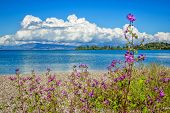 Beautiful Tranquil Summer Landscape With Calm Sea Water, Blue Sky And White Clouds, Green Trees And  poster
