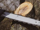 Sawn Electric Sawing Tree. The Stump Of Saw Cut Branches. poster