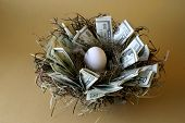 pic of nest-egg  - money lines the nest of this not - JPG