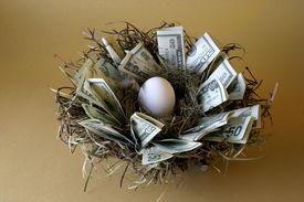 pic of nest-egg  - money lines the nest of this not - JPG