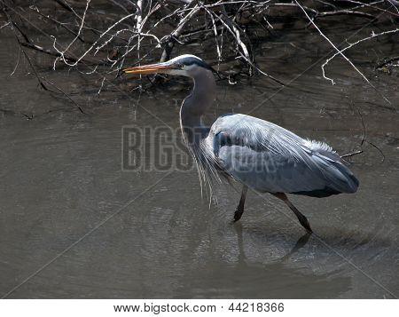 Blue Heron pesca em Boise Park 2