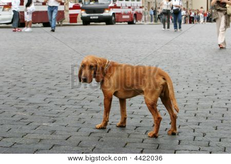 Lonely Dog In The City
