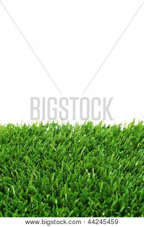 closeup of grass on a white background