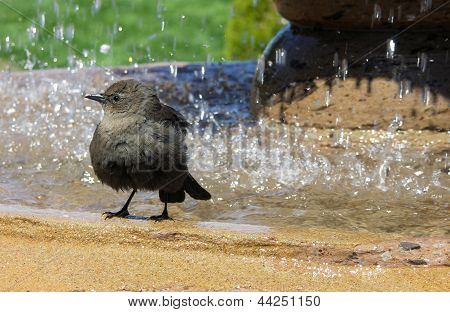 Bird In Fountain