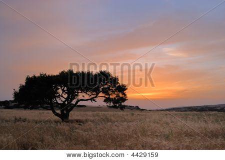 Árbol solitario en un prado