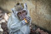Portrait Of The Monkey In The Uluwatu