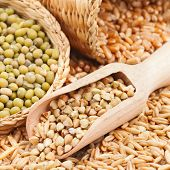 stock photo of buckwheat  - Green buckwheat wheat oat and mung - Cereal Grains and beans