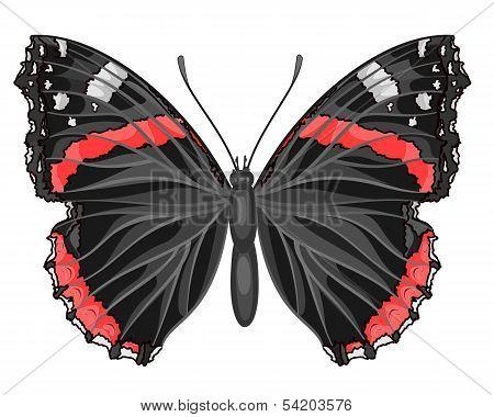 Butterfly Vanessa Atalanta.eps