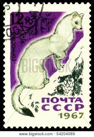 Vintage  Postage Stamp.  Ermine.