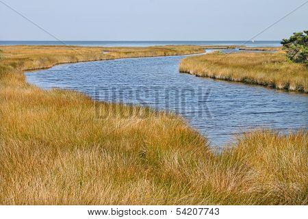 Inlet Marsh