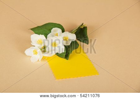 Flowers of  jasmine and empty card