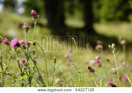 Wild plants from Dolomites