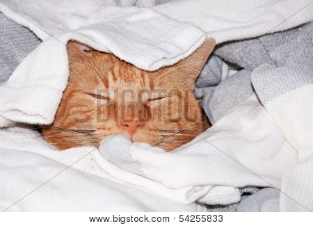 Ginger tabby cat sleeping in clean laundry - kitty heaven