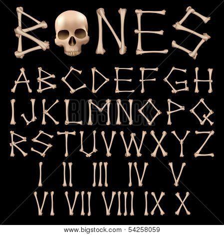 Bones Alphabet vector