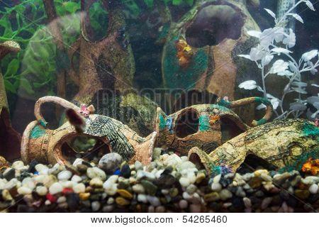 Aquarium With Ancient Design Settlement