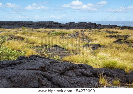 Older Lava Flow With Plants, Hawaii