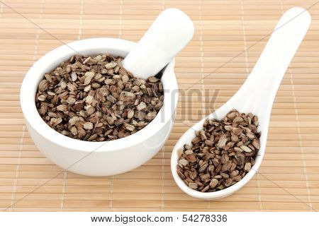 Angelica seed used in traditional chinese and natural alternative herbal medicine.