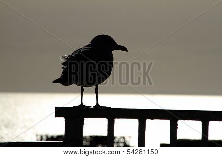 Silhouette of seabird.