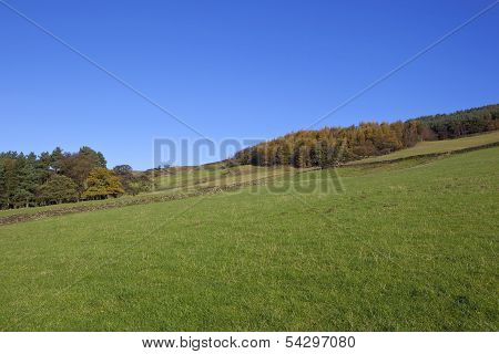 Autumn Meadows And Woodlands