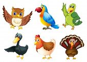 pic of turkey-hen  - Illustration of the six different species of birds on a white background - JPG