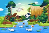 picture of duck pond  - Illustration of a group of ducks at the river in the forest - JPG