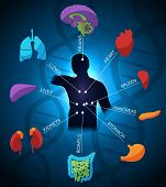 pic of endocrine  - Human anatomy colorful and bright design DNA chain at the background - JPG