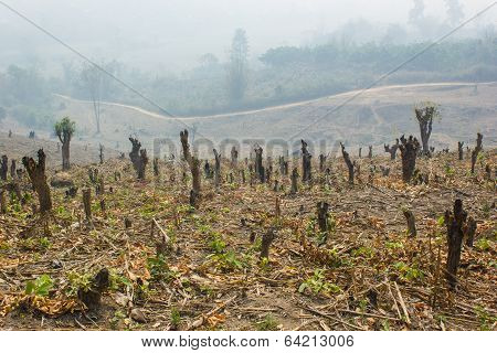 Cut And Burned To Plant Crops, Thailand