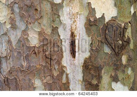 Bark background image