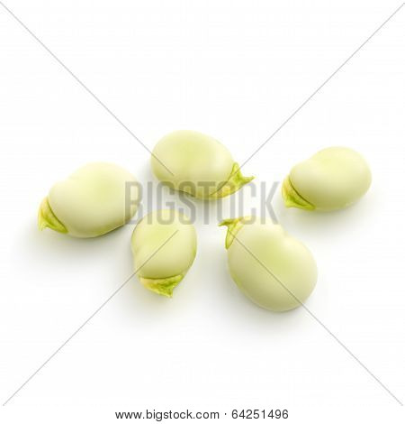 Seeds Of A Broad Bean Isolated On  White