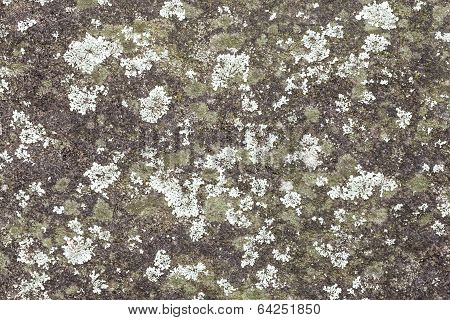 Mint And Green Colored Lichen On A Grey Rock Wall