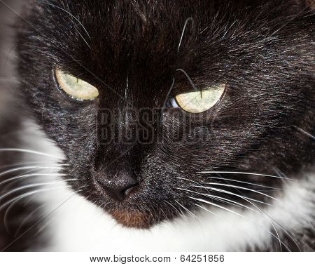 Close Up Of Black And White Cat's Head