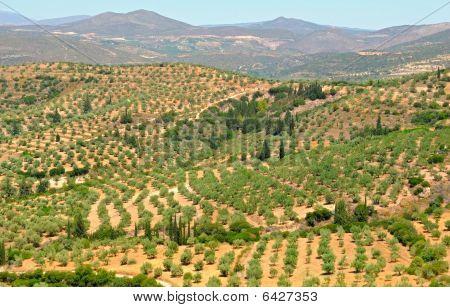 Peloponnese landscape