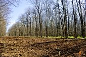 stock photo of afforestation  - Tree planting empty field inside a forest - JPG