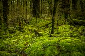pic of humidity  - Beautiful vivid rainforest in Fiordland national park - JPG