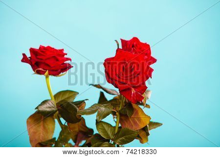 Bouquet Of Blossoming Red Roses Flowers On Blue