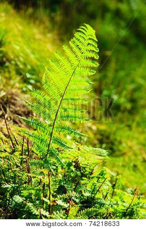 Jungle With Fern Leaves Green Nature Background