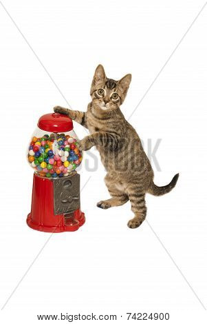 Kitten And Gumball Machine