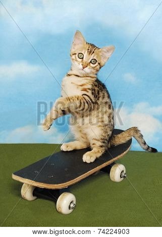 Kitten On A Board