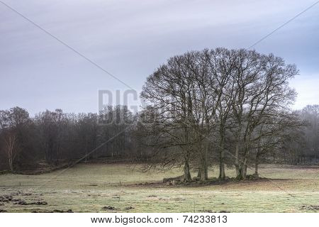 Cluster Of Trees On A Meadow