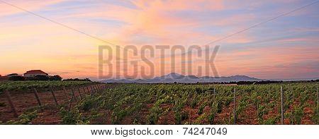France - Sainte Cécile Les Vignes