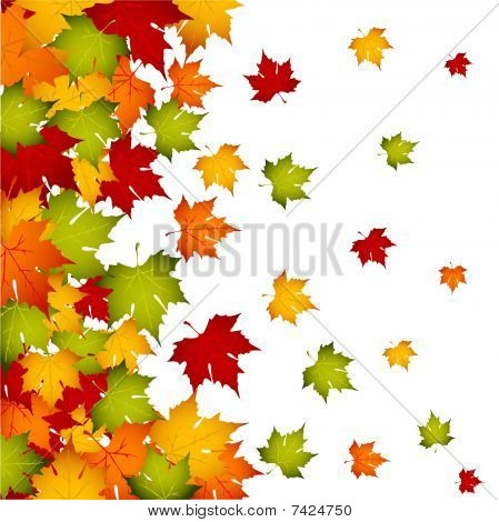 Autumn leaves,plants