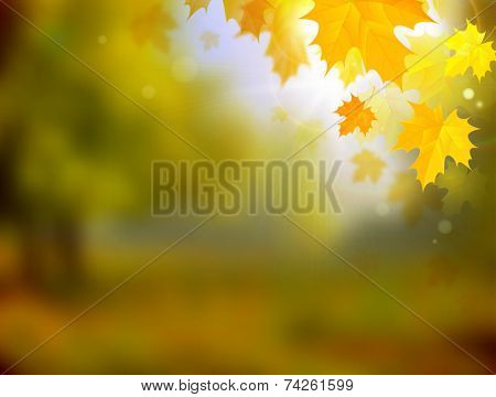 autumn color landscape with maple leaves