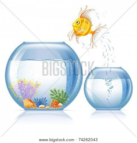 Lonely goldfish jumping to other aquarium, which bigger and more beautiful than the first