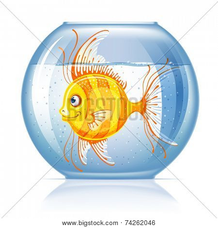 Beautiful lonely golden fish in round aquarium