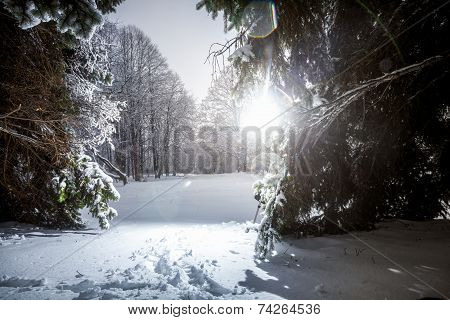 Photo Of Winter Siberia Forest At Sun Rays
