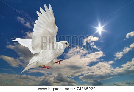 white dove in blue sky with clouds