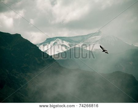 Condor Over Colca Canyon