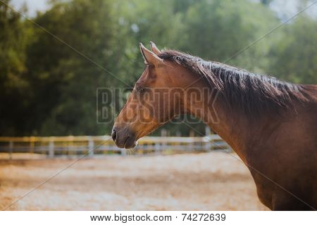 horse, horse's neck, the horse in the summer, horse chestnut suit