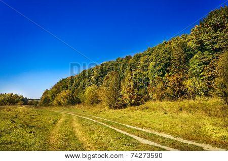 Golden Autumn Above Fairy Forest.
